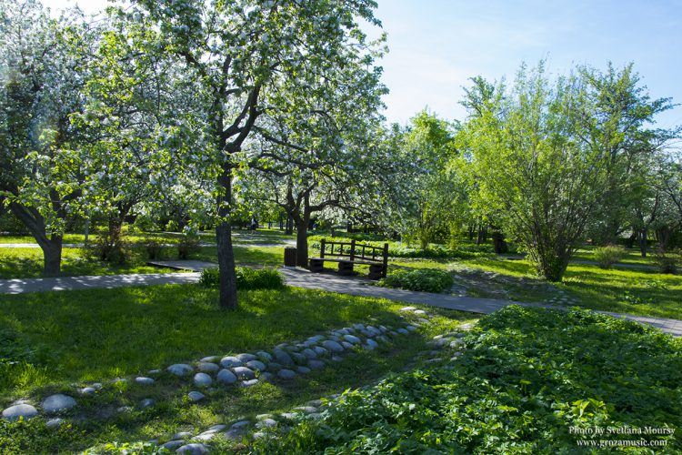 Blossoming of the legendary Apple Orchard at Angarskiye Prudi park. Photo by Svetlana Moursy